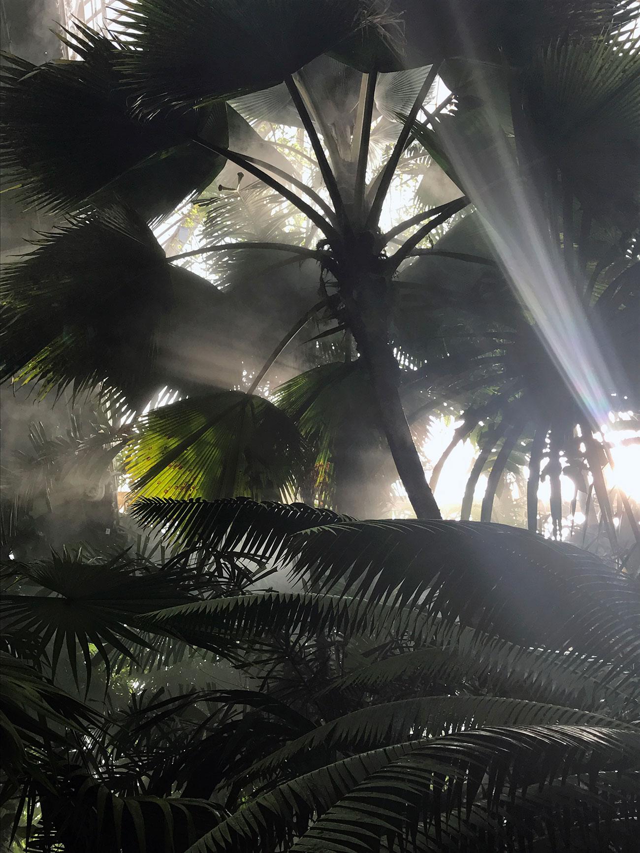 Jardin exotique - serre tropicale Kew Garden - Architecte paysagiste concepteur - Atelier Naudier - Montpellier & Aix en Provence - aménagement jardin