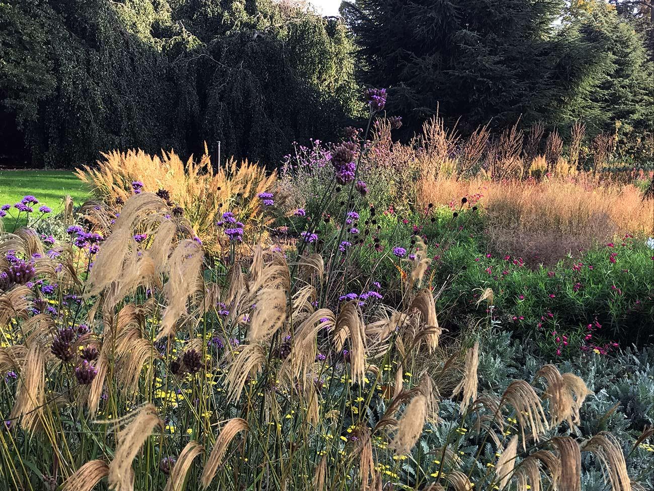 Jardin anglais - ambiance massif d'automne - Architecte paysagiste concepteur - Atelier Naudier - Montpellier & Aix en Provence - aménagement jardin