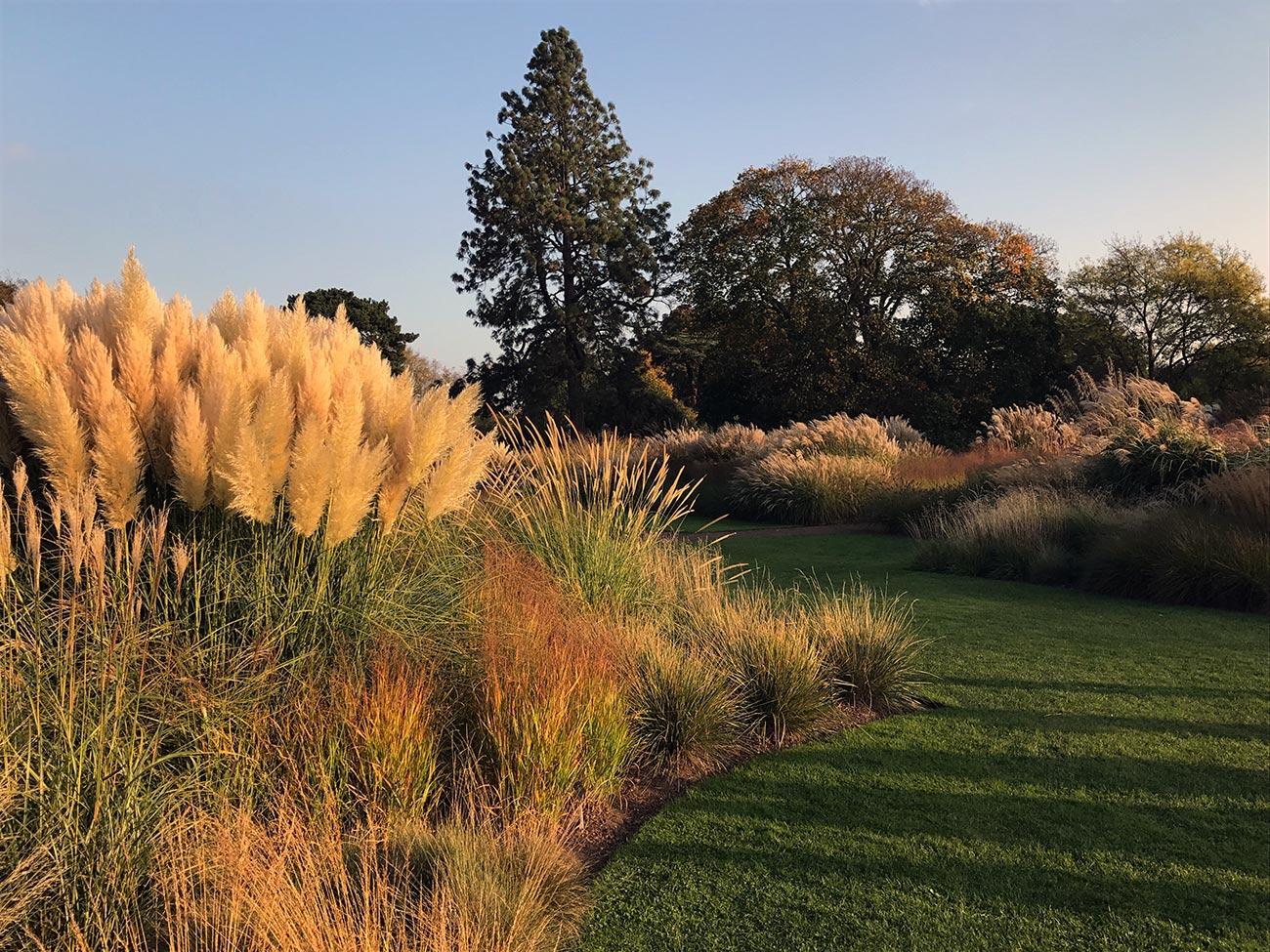 Jardin anglais graminées- ambiance massif d'automne - Architecte paysagiste concepteur - Atelier Naudier - Montpellier & Aix en Provence - aménagement jardin