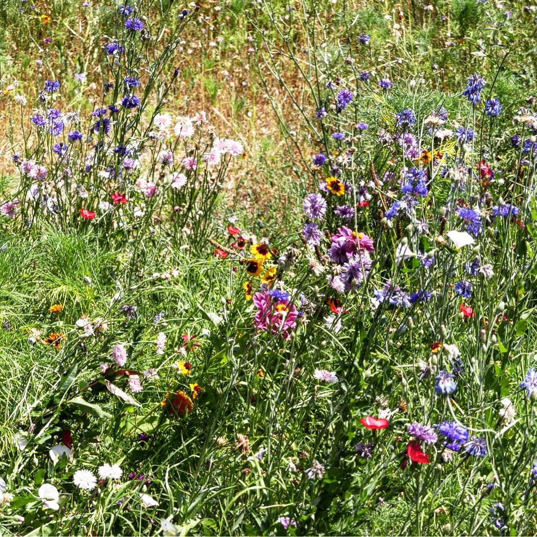 Prairie fleurie Ambiance -jardin naturel - Architecte paysagiste concepteur - Montpellier & Aix en Provence - Atelier Naudier