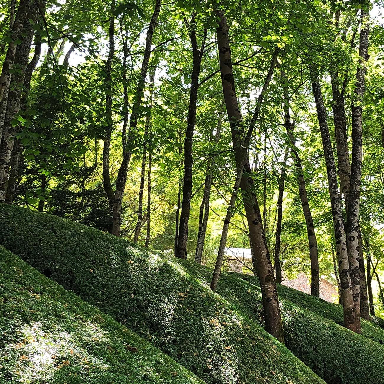 JARDIN DE L IMAGINAIRE - jardin d ombre et topiaires - Atelier Naudier - Architecte Paysagiste Concepteur -Montpellier & Aix-en-Provence